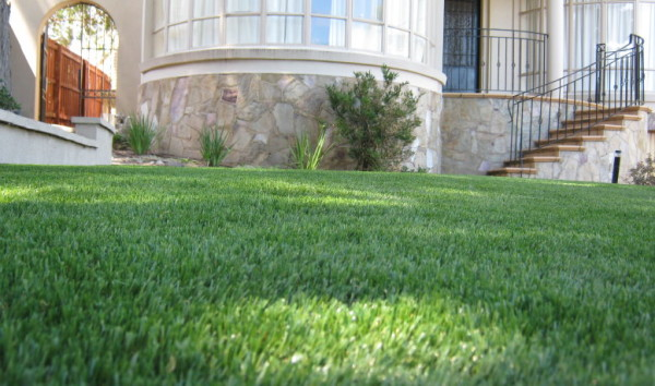 synthetic-grass-at-home